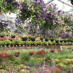 Retail Garden Centers