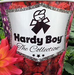 HARDY BOY COLLECTION
