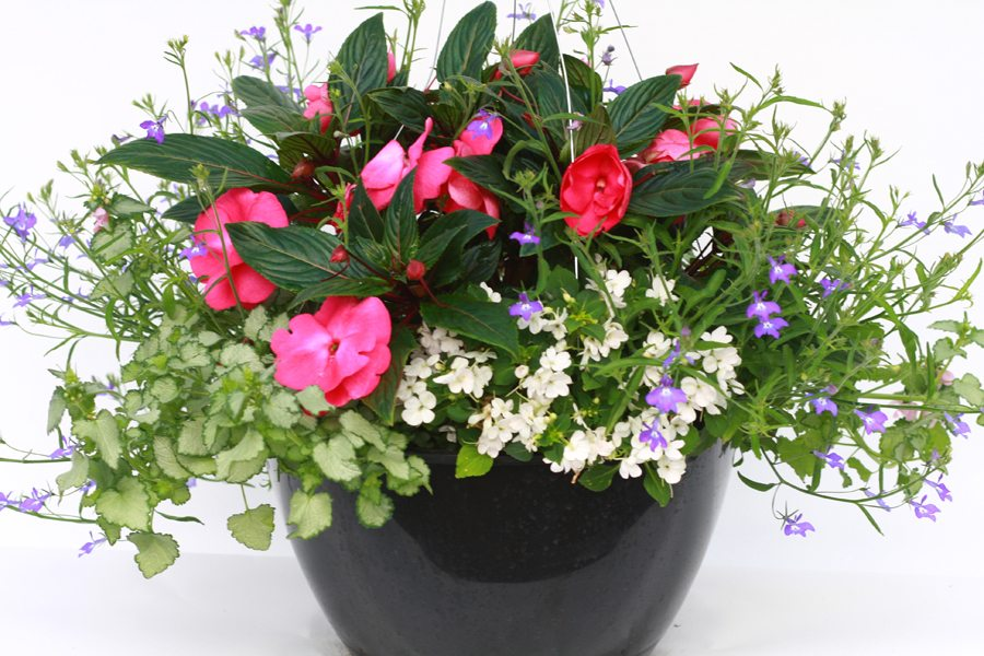 Hardy Boy Plants