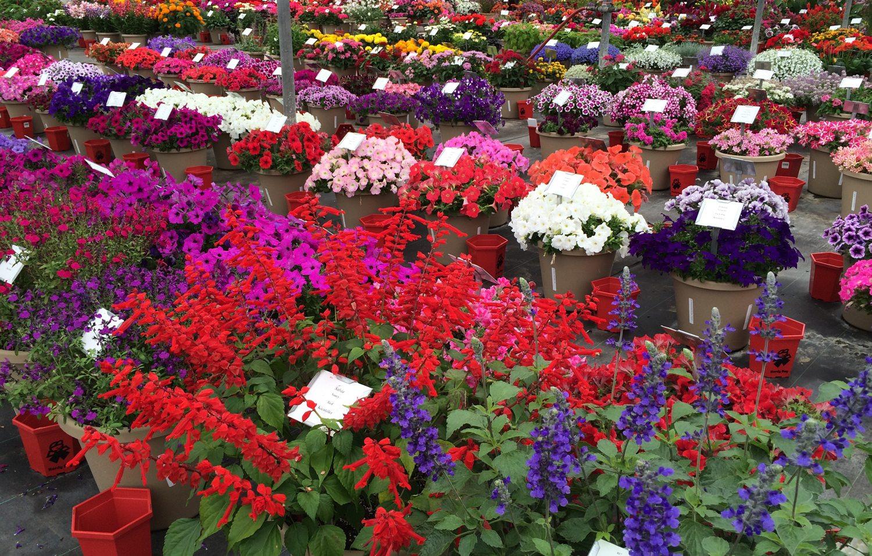 Welby gardens jobs garden ftempo for Welby gardens